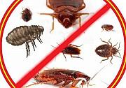 Уничтожение всех видов насекомых Нижний Тагил