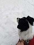 Собака Нижний Тагил