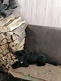 Продам щенка породы ягдтерьер Нижний Тагил